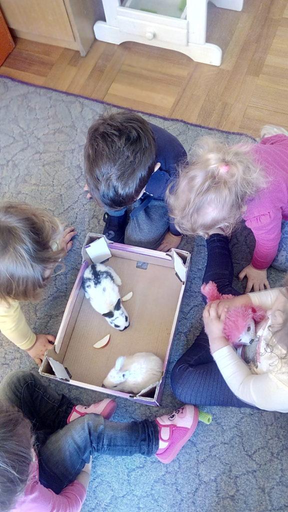 """3 malena zečića u skupini """"Kikići"""""""