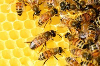 ZANIMANJE PČELAR U ZVONČIĆIMA