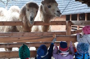 Zvončići posjetili deve